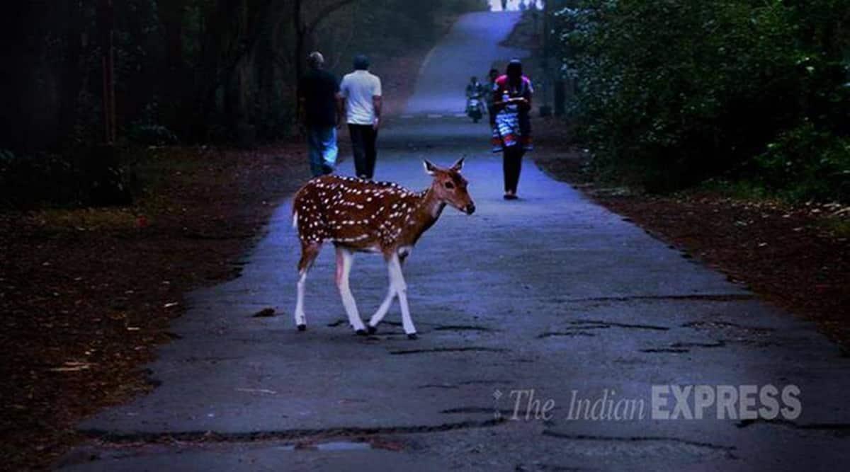 Sanjay Gandhi National Park, SGNP reopens, Mumbai news, Maharashtra news, Indian express news
