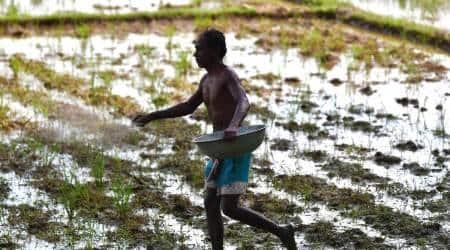 MSP, Gujarat Farmers, Groundnut