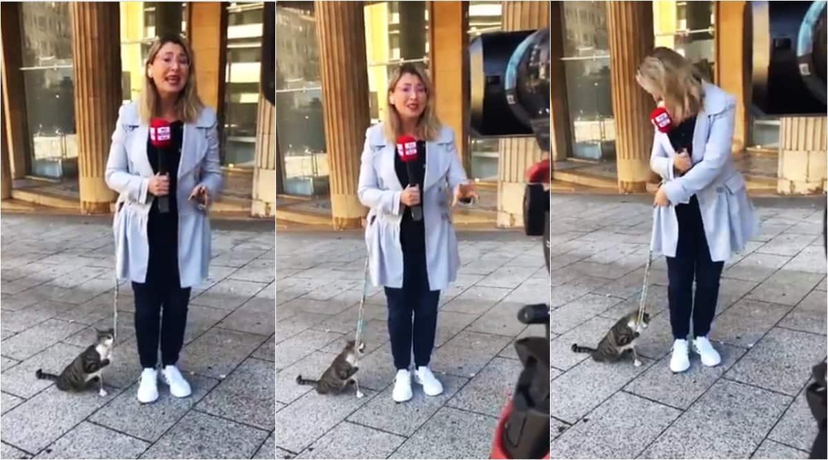 beirut journalist interrupted by cat, larrisa aoun cat interrupts during reporting, cat interrupt reporter, beirut, beirut blast, viral videos, cat interrupt live tv, cat tv journalists, indian express