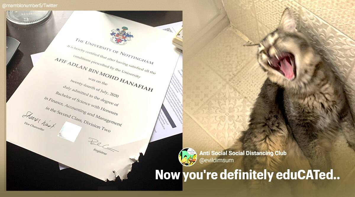 cat eats degree, cat chew degree certificate, cat ate student degree certificate, pet destroy important document, viral news, funny cat news, indian express