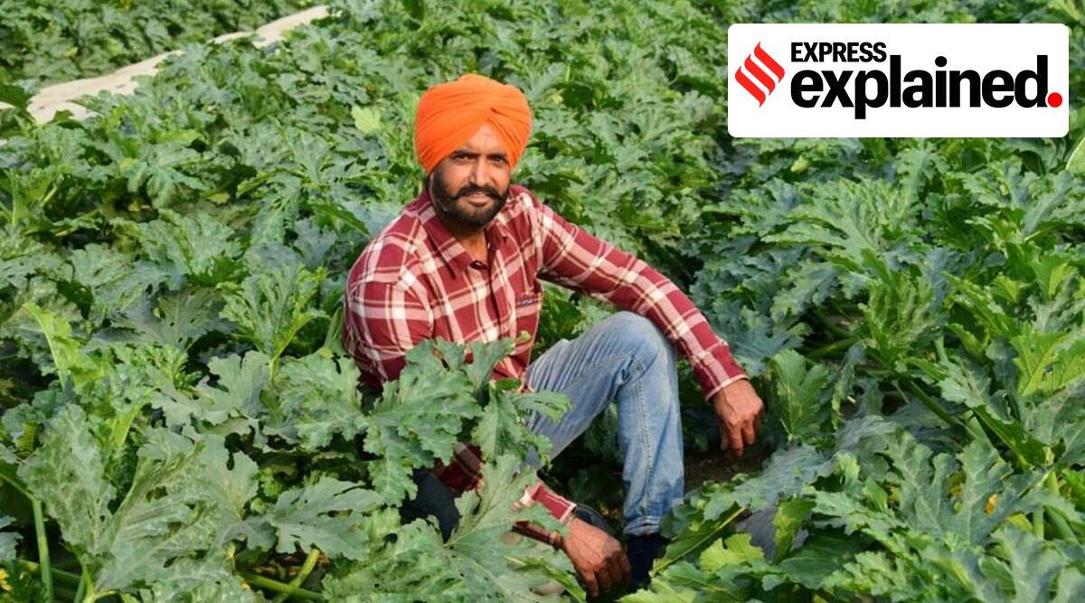 punjab, punjab farmers, punjab contract farming, what is contract farming, contract farming explained, indian express