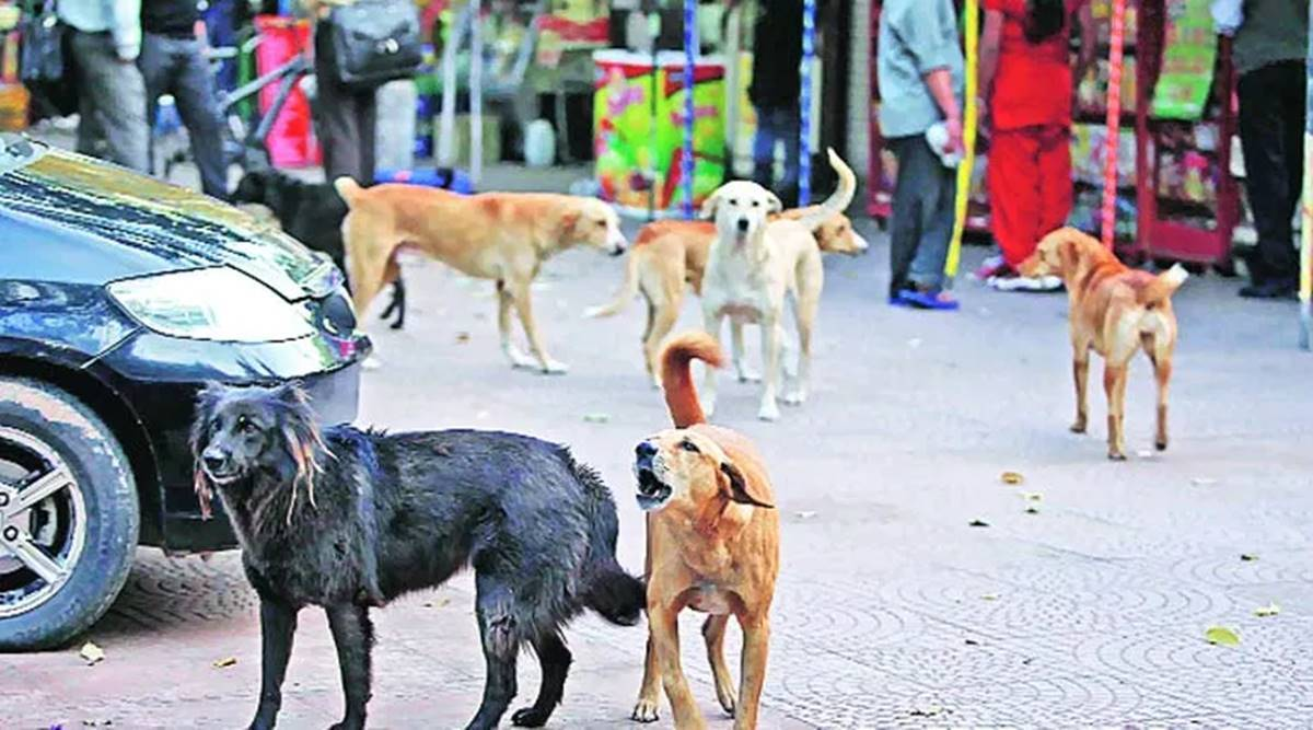 Mumbai dog stray population, BMC hire dog catchers, Mumbai dog sterilisation drive, BMC anti-rabies scheme, Mumbai news, Maharashtra news, Indian express news