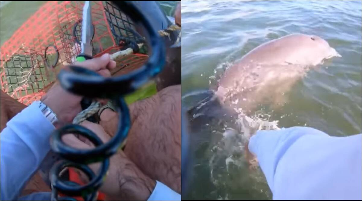 man rescues dolphin, dolphin rescue viral video, man cut fish net dolphin, dolphin tail cage tangled, man cut rope with knife help dolphin, florida jet skier rescue dolphin, viral videos, jet skier dolphin rescue video, good news, indian express