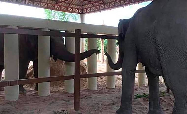 kaavan, world's loneliest elephant, kaavan cambodia, pakistan elephant, cher, express explained, indian express, how kaavan went to cambodia,