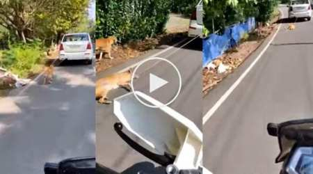 kerala pet dog tied to car, kerala pet dog dragged on road, kerala news, kochi pet dog, kerala pet dog video, indian express