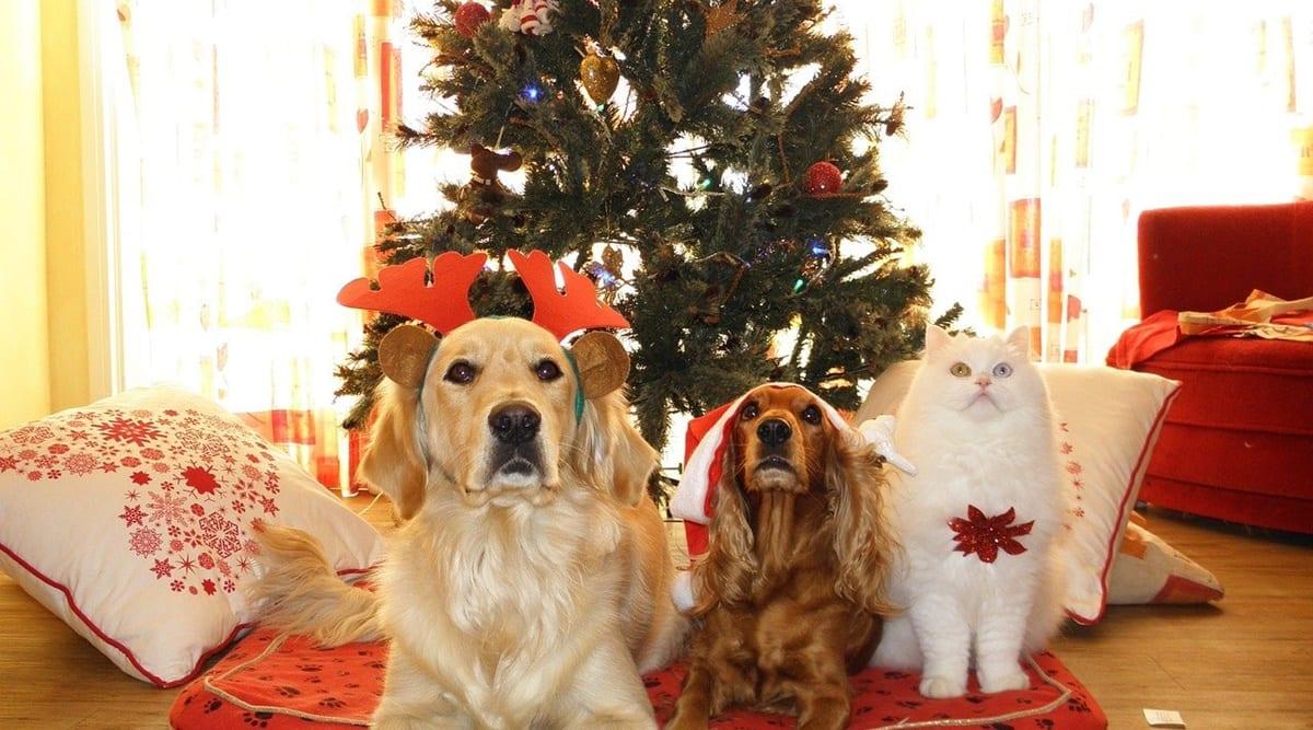 christmas pet treats, easy christmas pet treats, recipe for christmas pet treats, homemade christmas pet treats