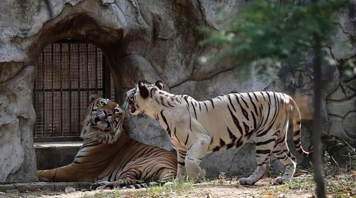 World's 'biggest zoo, Jamnagar Zoo, Gujarat Zoo, Ahmedabad news, Gujarat news, Indian express news