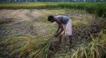 China buys Indian rice for first time in decades amid border tensions