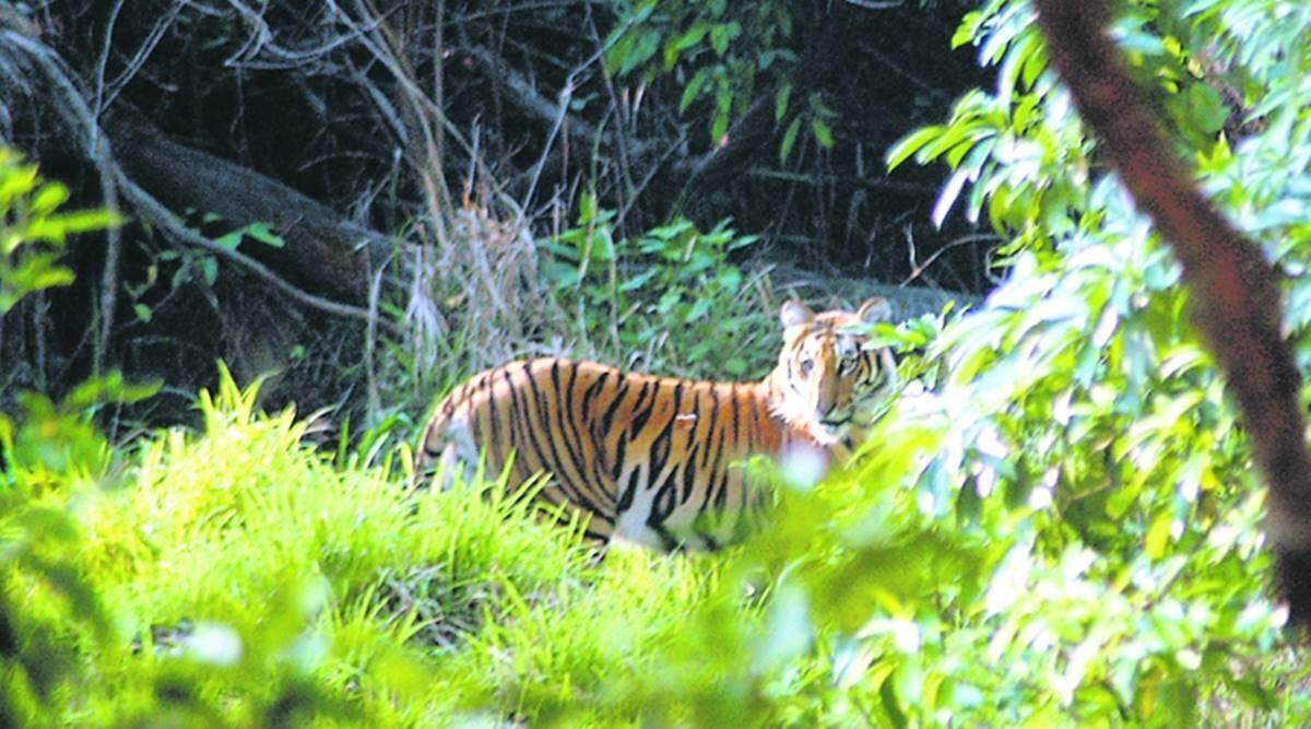 maharashtra wildlife, maharashtra forests, maharashtra forest dept, maharashtra conservation reserves, indian express news