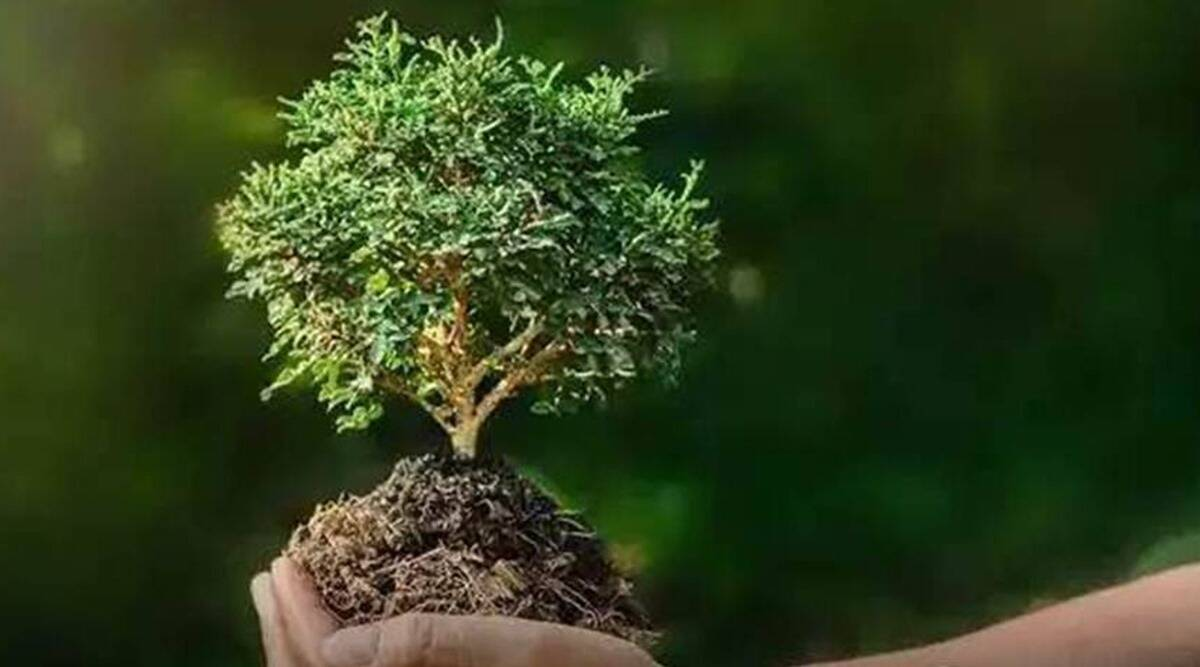 Giving trees growing out building walls and highrises new life in the earth