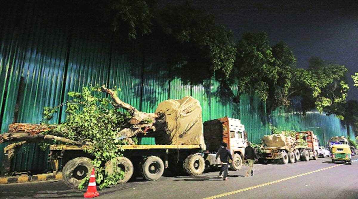 central vista project, new parliament building construction, Central Public Works Department, new parliament building trees relocation, indian express news