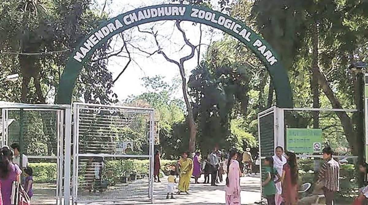 Chhatbir Zoo, MAHENDRA CHAUDHARY Zoological Park, Chhatbir Zoo to reopen, Chhatbir Zoo reopening, indian express news