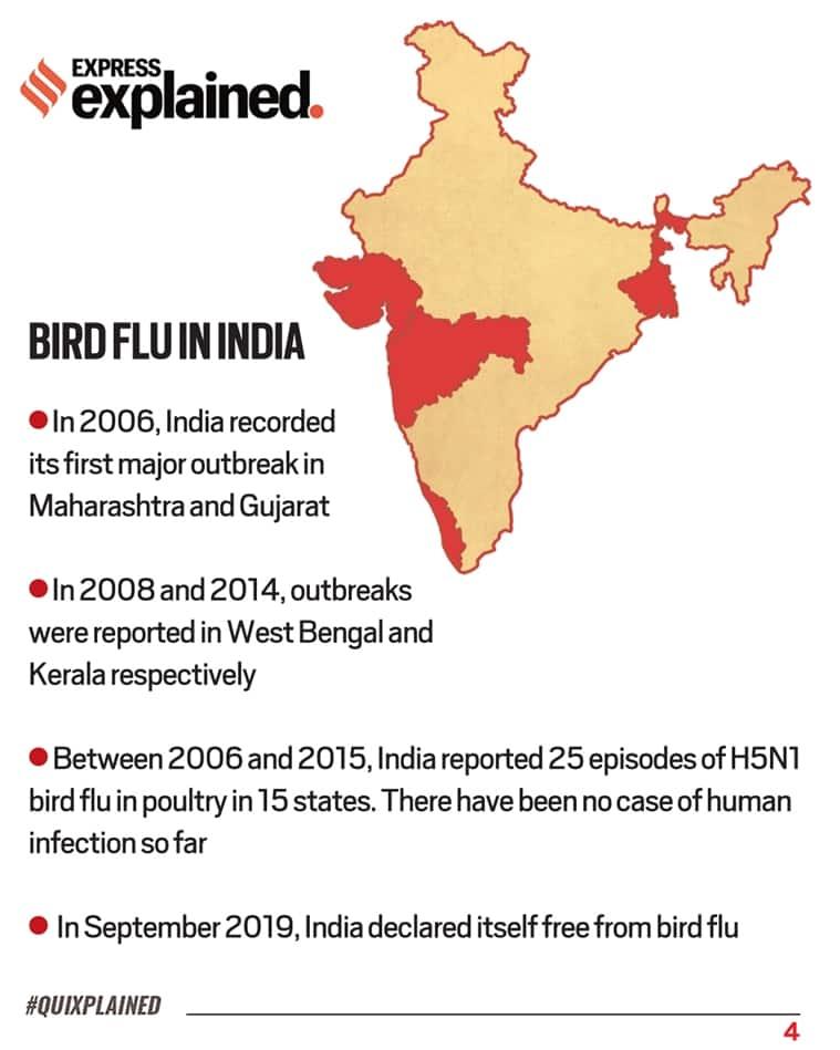 Bird Flu, Bird Flu India, What is Bird Flu, Bird Flu explained, Bird Flu treatment, Bird Flu symptoms, Bird Flu causes, Indian Express
