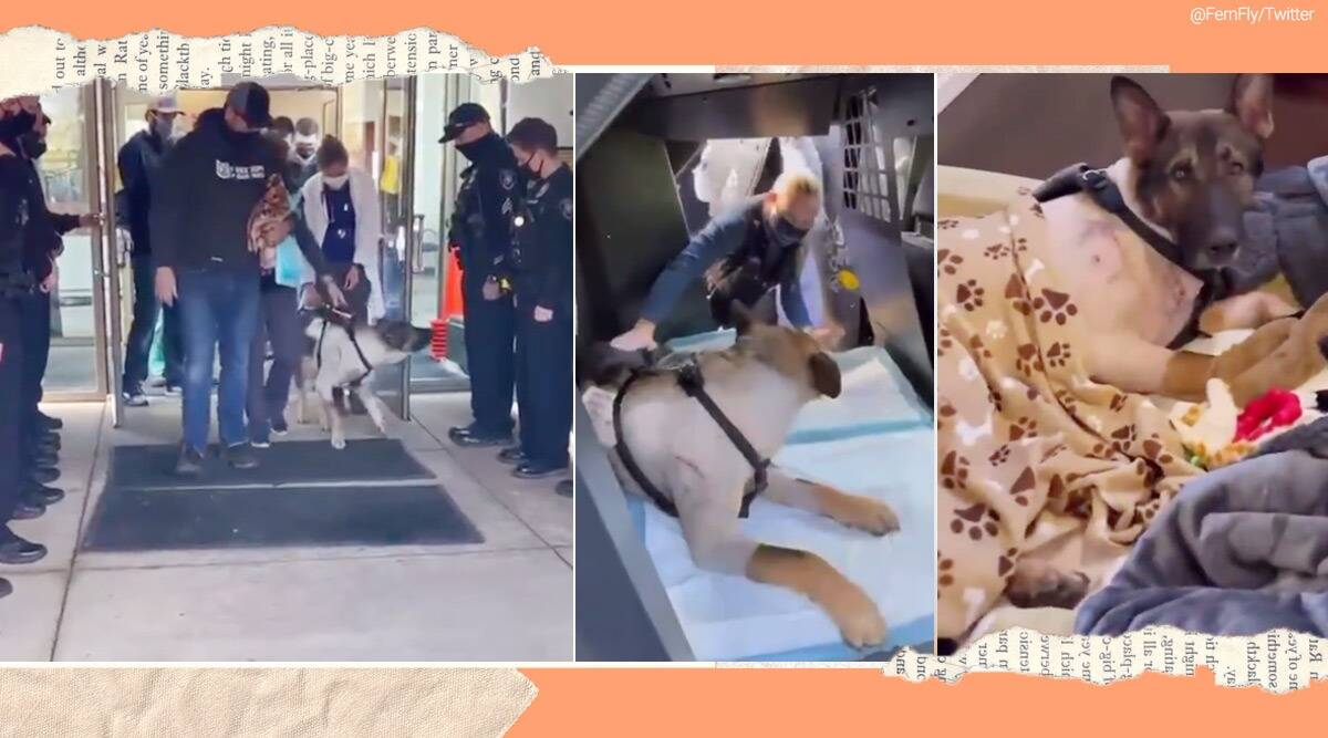 K9 police Dog, police Dog recovery, Poloce dog welcome post surgery viral video, K9 police Arlo, Police dog Arlo shot, Arlo bullet injury, Viral video, trending news, Indian Express news.