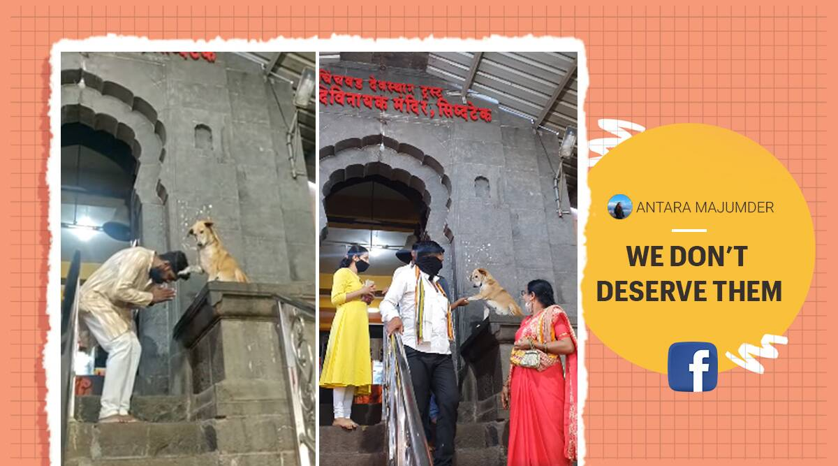 Dog, dog blessing devotees, Dog, blessing people outside temple, Dog blessing viral video, Maharashtra, Dog blessing Siddhivinayak Temple, Siddhivinayak Temple, Viral video, Indian Express news.