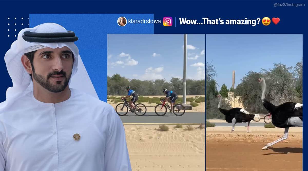 Dubai, Dubai Crown Prince, Dubai prince Fazza, Dubai prince ostrich race, Dubai prince cycle race ostrich, ostrich race videos, ostrich viral videos, Trending news, Indian Express news