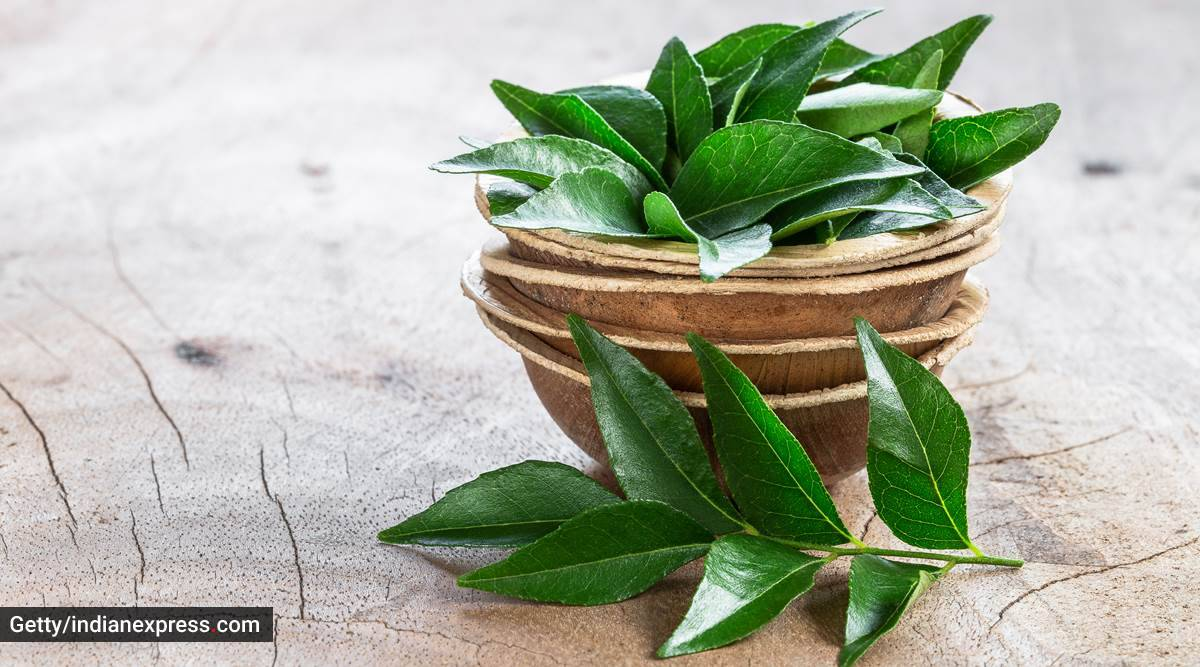 curry leaves, uses of curry leaves, health benefits of curry leaves, indianexpress.com, indianexpress, curry leaves paste, curry leaf paste, curry leaves for hair care, hair fall remedy, curry leaves for weight loss,