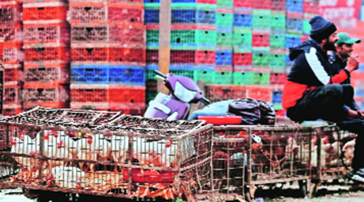 Kejriwal responds to bird flu fears: Curbs on bird import, Ghazipur poultry market shut