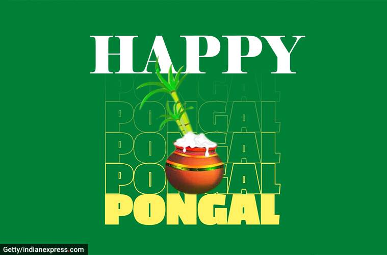 happy pongal, happy pongal 2021, pongal, pongal 2021, happy pongal images, happy pongal images 2021, happy pongal 2021 status, happy pongal wishes images, pongal images, pongal wishes images, pongal quotes, happy pongal quotes, happy pongal wishes quotes, happy pongal wallpaper, happy pongal video, happy pongal pics, happy pongal photos, happy pongal messages, happy pongal sms, happy pongal wishes sms, happy pongal wishes messages, happy pongal status video, happy pongal wishes status, pongal wishes