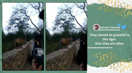 Tiger, Tiger close encounter with tourists, tiger at Ranthambore, Ranthambore tiger encounter, Ranthambore National Park, Viral video, Rajasthan Tiger viral video, trending news, Indian Express news