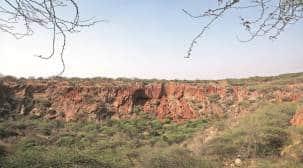 More wildlife in Aravallis at Faridabad, Gurgaon than at Asola, need better protection: Study