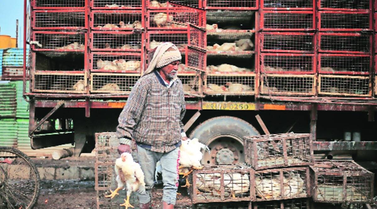 Bird Flu outbreak: How different states are tackling the virus?