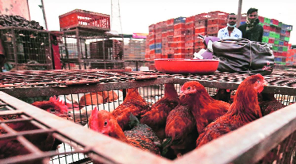 Delhi: Recovering after Covid, eateries say no chicken order may deal death blow