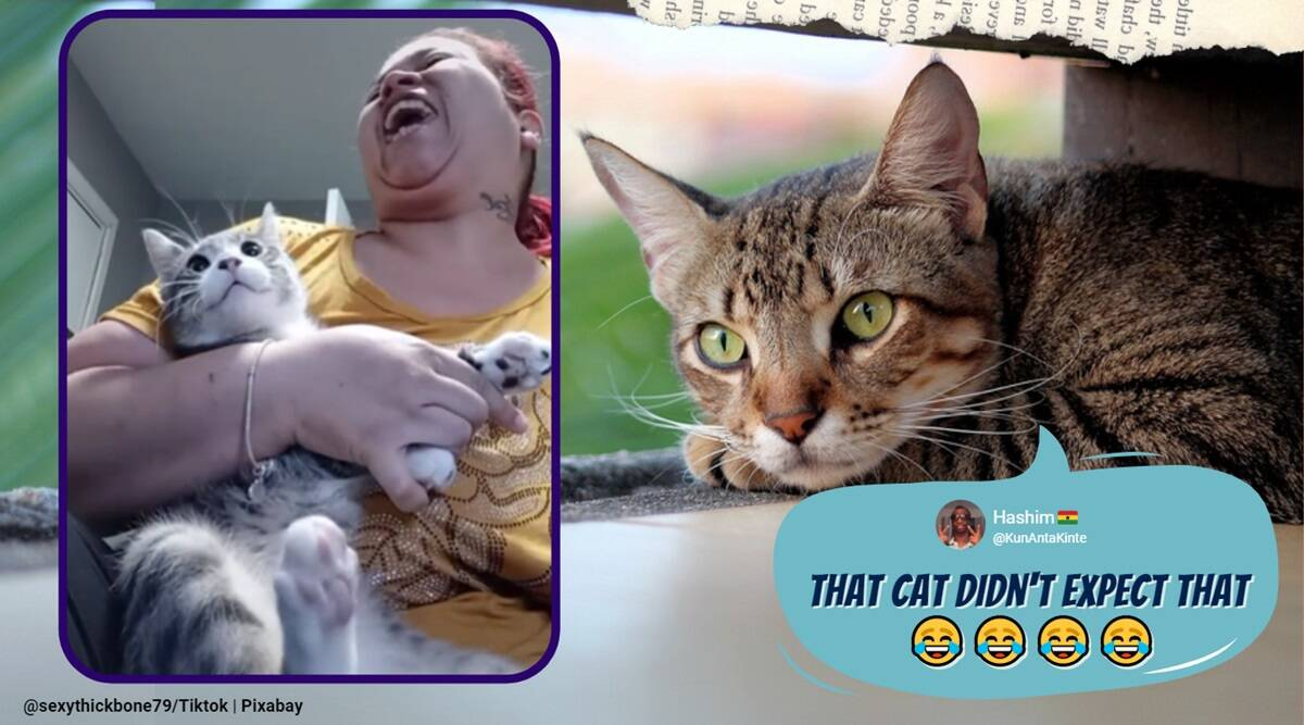 funny cat videos, cat nail trimming video, bad cat nail trim video, sexythick79 cat video, viral tiktok cat nail trim video, cat nail cut, cat hissing video, trending news, indian express news