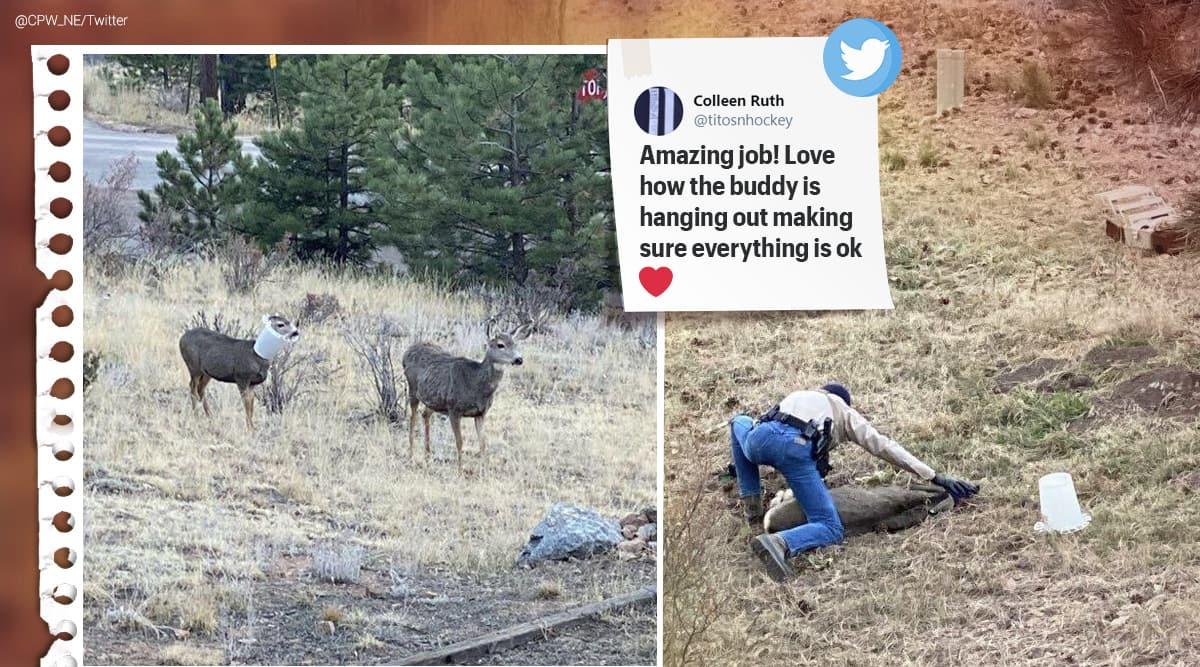 Mule deer, deer rescue Colorado, wildlife officer deer rescue Colorado, deer stuck on bird feeder, deer rescue pictures, Colorado Parks and Wildlife, Trending news, Indian Express news