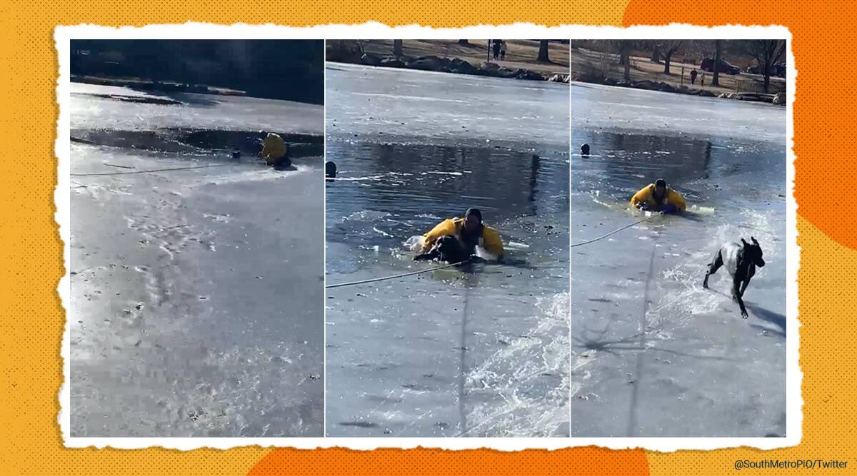 dog, dog rescue, South Metro Fire Rescue, Firefighter rescue dog viral video, Colorado, USA, trending news, indian express news