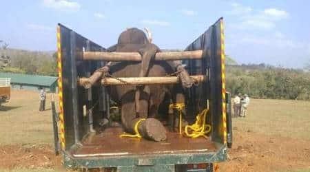 Tamil Nadu elephant death, elephant attack, Tamil Nadu news, tribal remembers TN elephant, Masinagudi, Indian express news