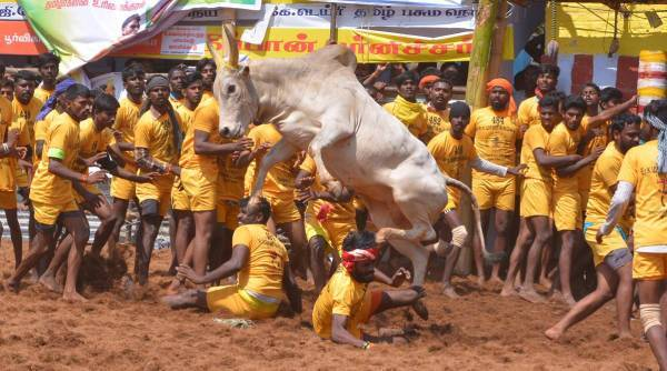 Jallikattu, Jallikattu 2021 dates, Jallikattu registration, Jallikattu Covid rules, Jallikattu tokens, indian express, tamil nadu news