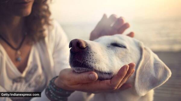 pets, health, indianexpress
