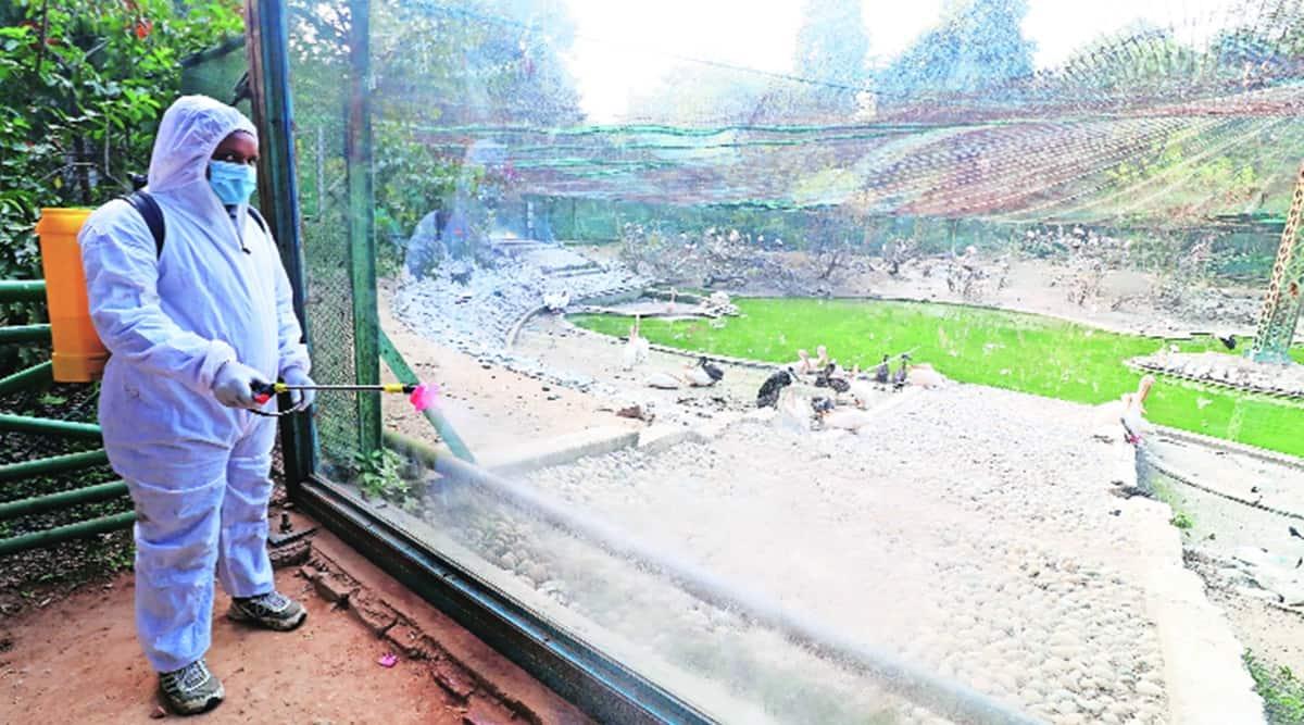 UP avian flu, UP bird flu, UP govt, UP bird sanctuaries, UP zoos, Lucknow news, UP news, Indian express news