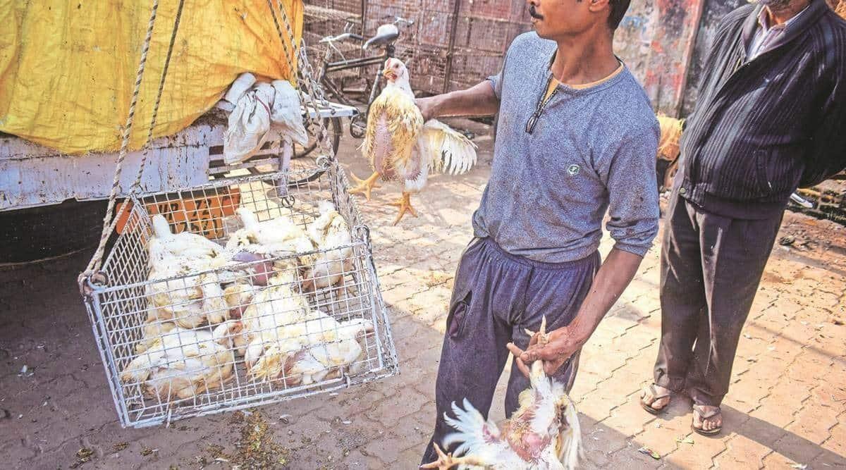 Bird flu, Birdflu in maharashtra, Birdflu cases, avian flu, Poultry Prices, Poultry, indian express news
