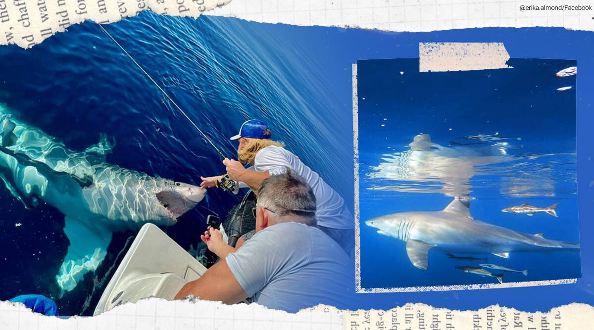 white shar bites into boat, 15-foot-long shark, Florida, florida shark story, florida viral, Erika Almond, Tampa Bay and the Gulf of Mexico, trending, indian express, indian express news