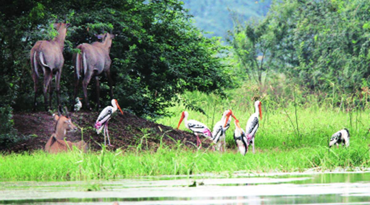 In Gurgaon, vigilance stepped up at Sultanpur national park, wetlands