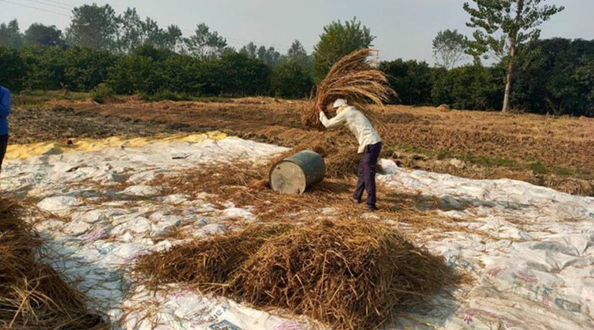 Who do Delhi's farmers sell to?  FCI, wheat growers differ on answer