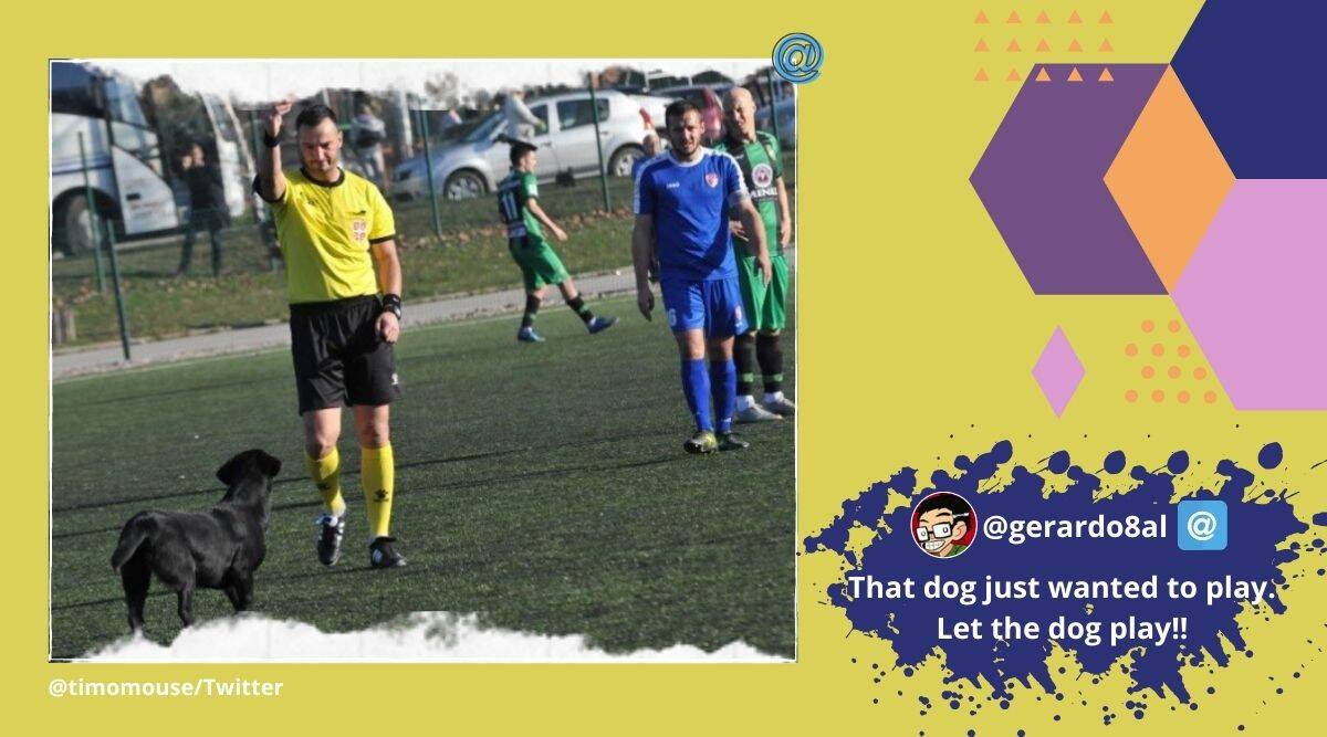 Dog sent off by referee, Dog invades football pitch, Dog gets red card, Dog interrupt football match Serbia, football, Serbia, Trending news, Indian Express news