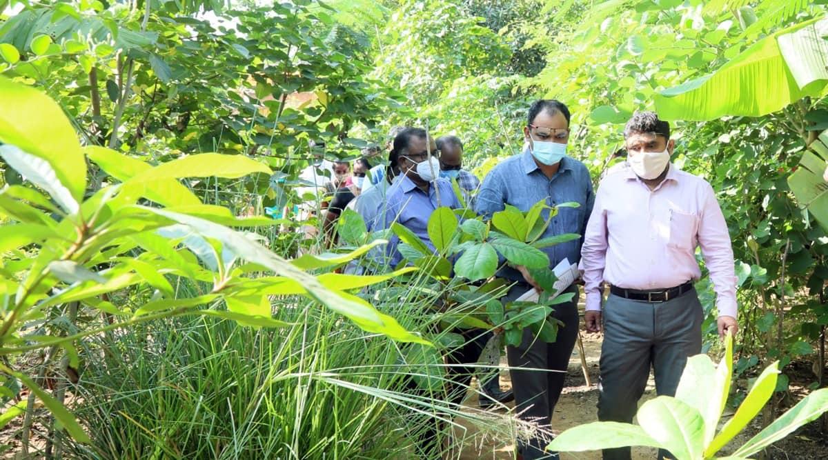 Greater Chennai Corporation, urban forest, Miyawaki forest, Kottupuram, Chennai plantation drive, chennai green belt, chennai news