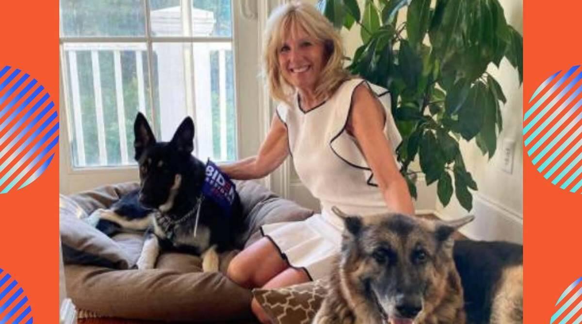 Major and Champ Biden, first dogs Major Biden and Champ Biden, Joe Biden dogs, Jill Biden dogs, indian express news