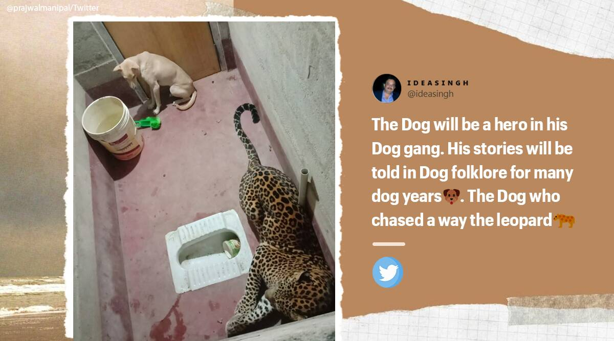 Karnataka, Dog and leopard stuck inside toilet, Dog and leopard viral video, Dog and leopard videos, Trending news, Indian Express news.