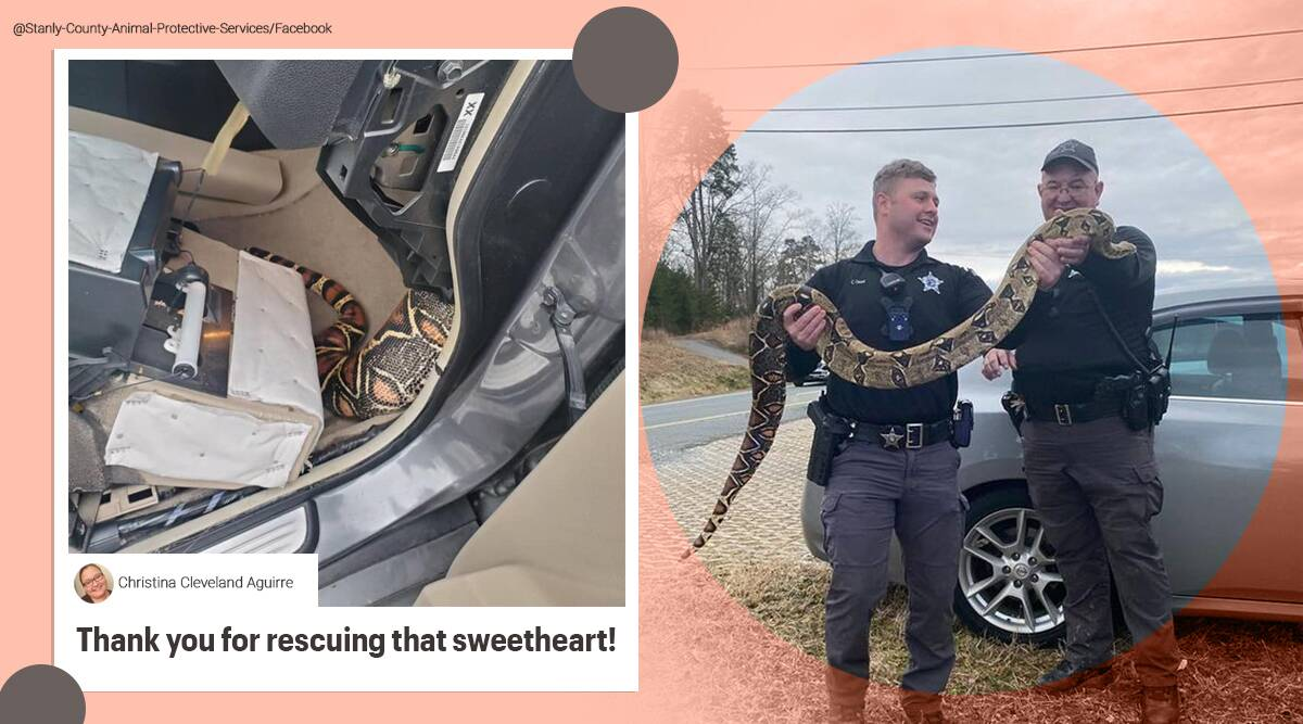 Boa constrictor, boa constrictor inside car dashboard, boa constrictor rescue, boa constrictor rescued from car dashboard, boa constrictor pet, North Carolina, Trending news, Indian Express news.