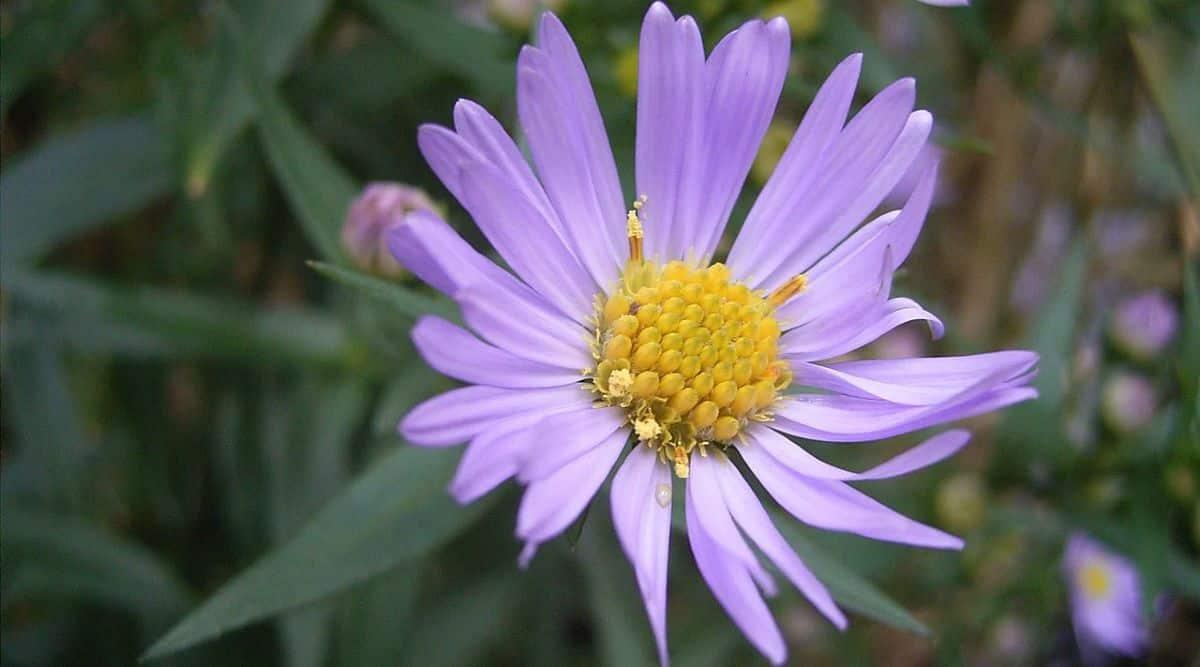 Wikimedia, Flower, Wikimedia flower, WikiFlower mystery,
