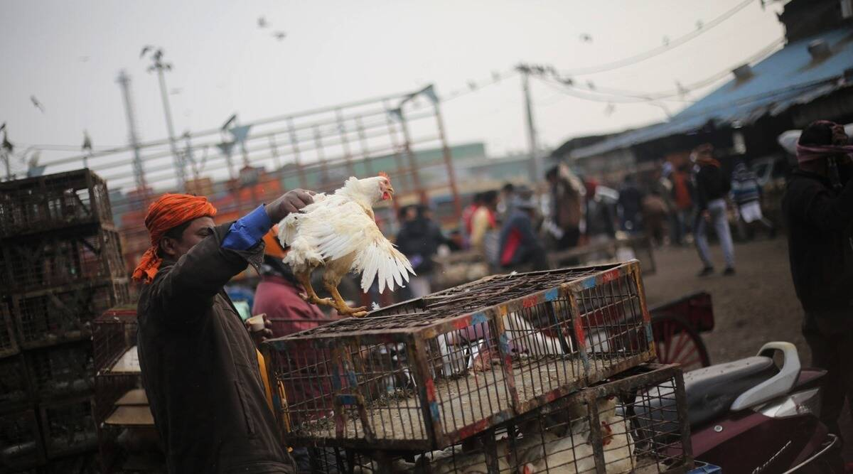 Gujarat bird flu