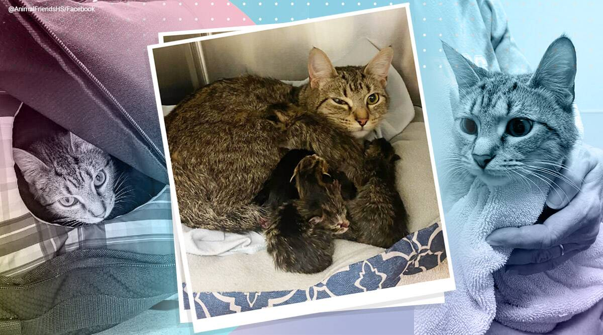 Ohio bomb squad was called to disarm an adorable bag of kittens, ohio bom squad viral story, kitten, cute kittens, suspicious bag, trending, indian express, indian express news