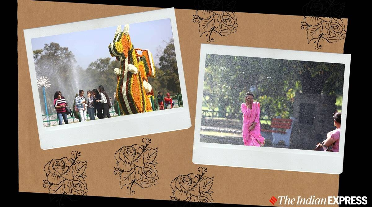 49th Rose Festival begins in Chandigarh; see pics