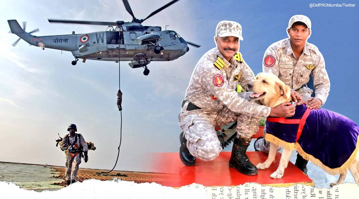 indian navy, indian navy diver, indian navy diver sniffer dog, sniffer dog indian navy viral video, Ministry of Defence, twitter reactions, indian express news