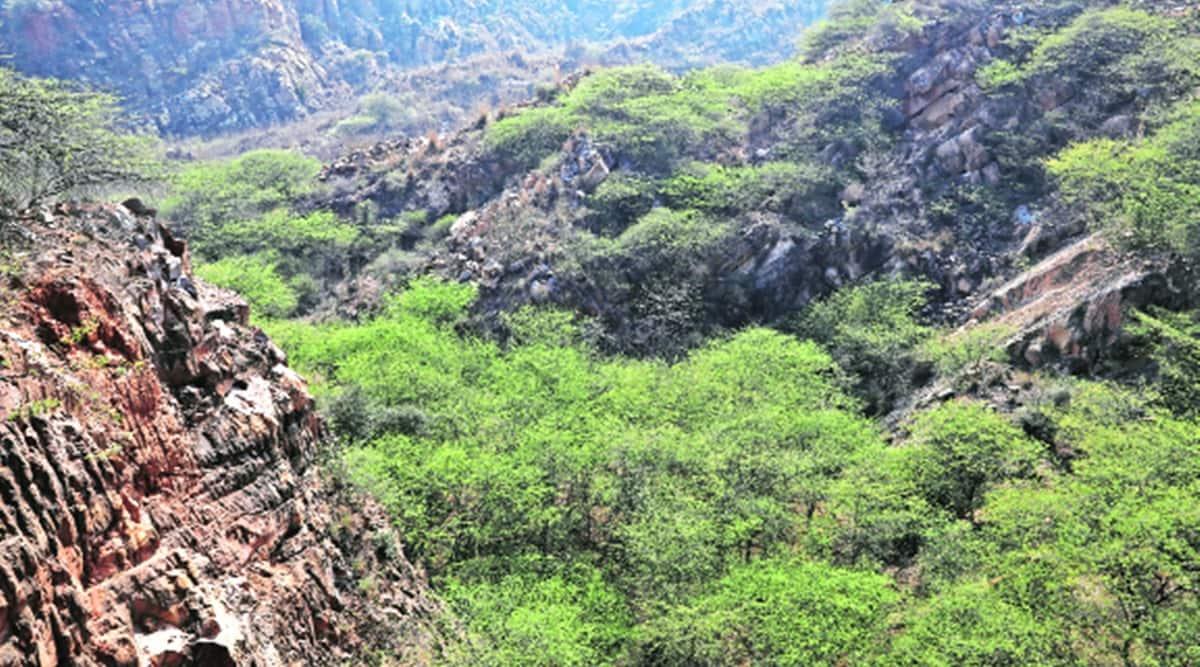 Mangar landscape, Aravallis faridabad, migrant birds in delhi, high diversity bird species, Mangar landscape bird species, delhi news, indian express news