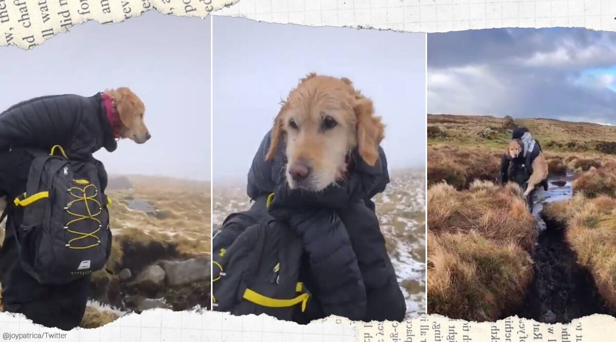 dog, dog rescue, Wicklow mountains, couple rescue lost dog dublin, walk 10 kms, dog rescue trending, dog rescue Wicklow mountains, Indian express news